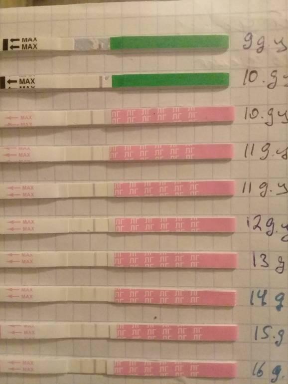 Если тест на овуляцию положительный: сколько времени до зачатия