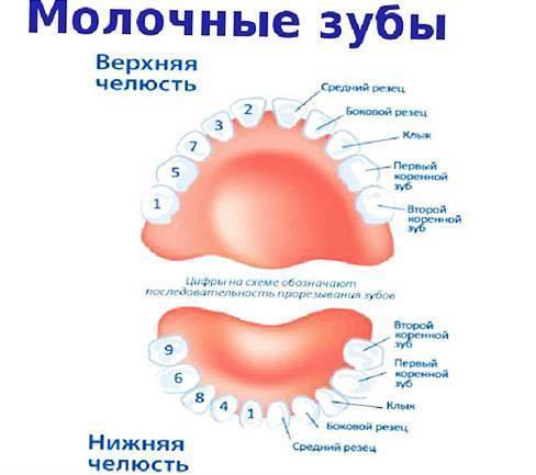 У ребенка болит молочный зуб: почему и как помочь - много зубов