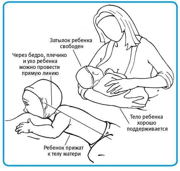 """Как можно держать ребенка в 1 месяц. как правильно держать новорожденных: изучаем позу """"столбиком"""" после кормления, способы поддержки при подмывании. когда новорожденный начинает держать головку"""