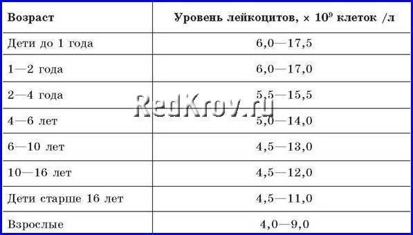 Норма лейкоцитов в крови у детей: таблица по возрасту у новорожденных и старше