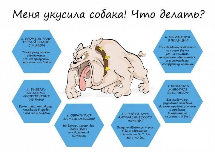 Сколько уколов от бешенства делать, если укусила собака? вакцинация от бешенства