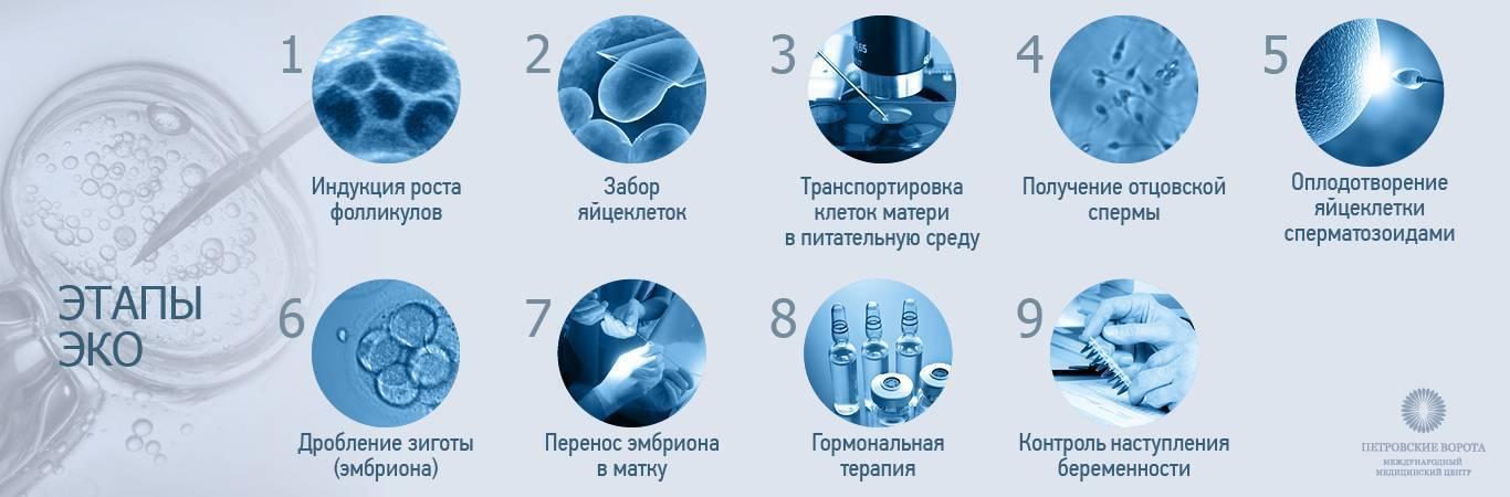Как проводят подсадку эмбрионов во время проведения эко, на какой день цикла это делают, каковы шансы на успех? - врач 24/7
