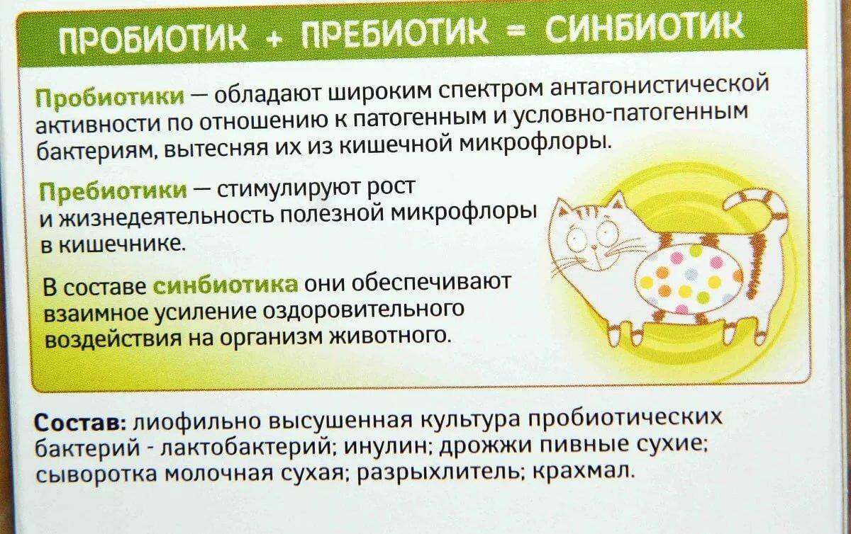 Пребиотики для детей – список лучших препаратов, отзывы и цены