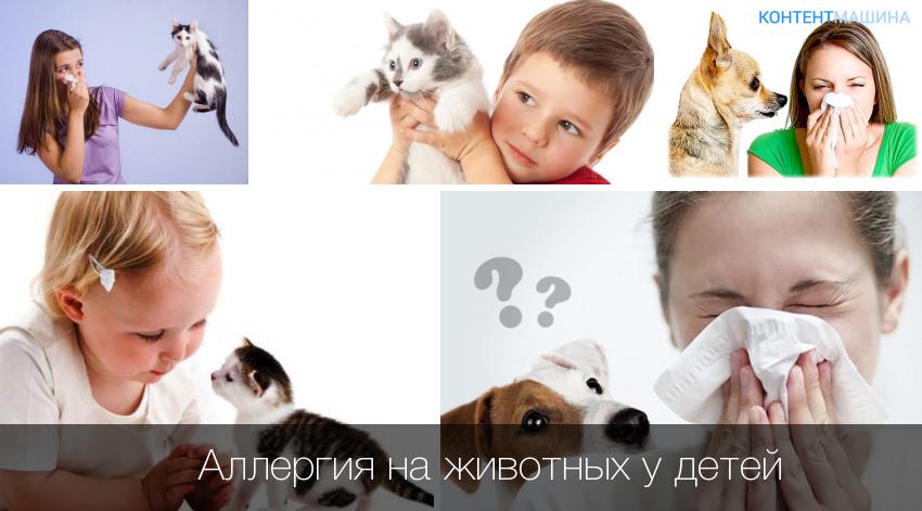 Аллергия на собак у детей: мифы и реальность