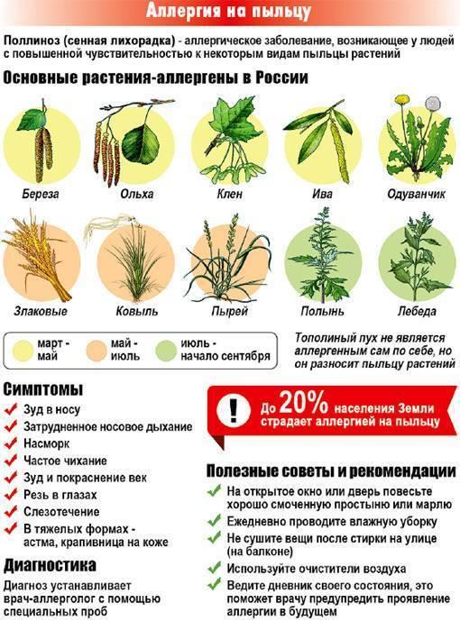 Аллергия на пыльцу: 7 способов уменьшить симптомы поллиноза.