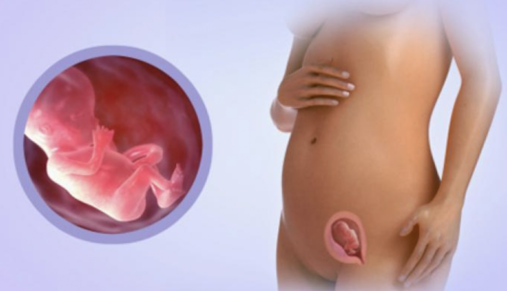 6 месяц беременности: с какой недели начинается, как выглядит живот на этом сроке? | календарь | vpolozhenii.com