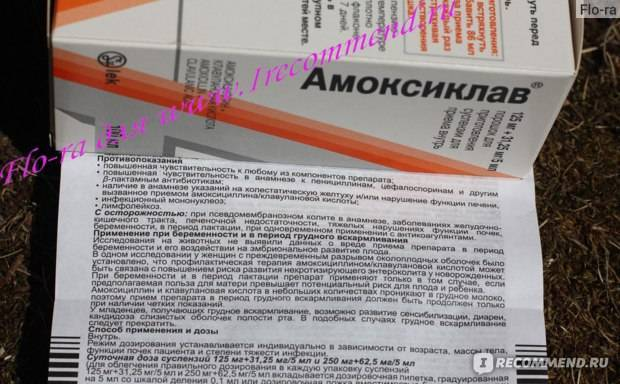 Суспензия амоксиклав для детей (антибиотик) – показания к применению, дозировка, побочные действия