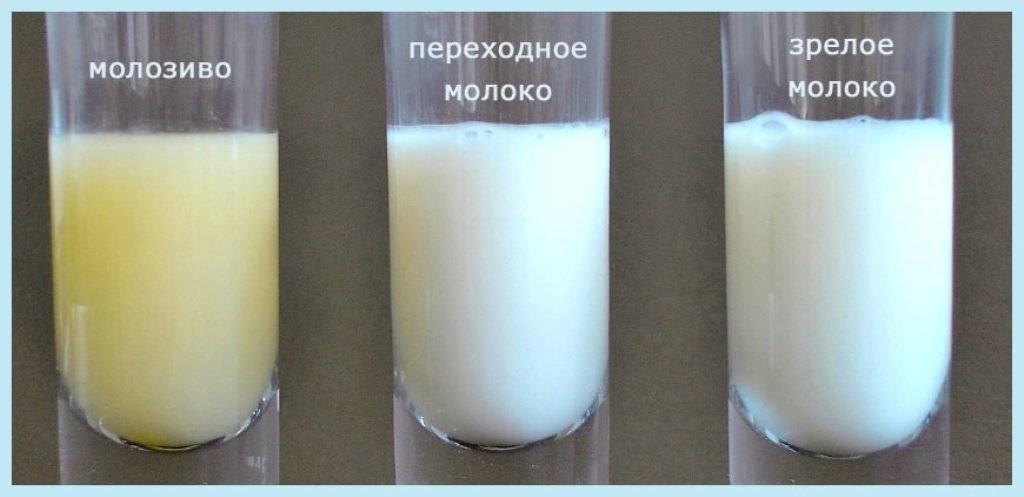 Когда появляется молоко у беременных и как вырабатывается