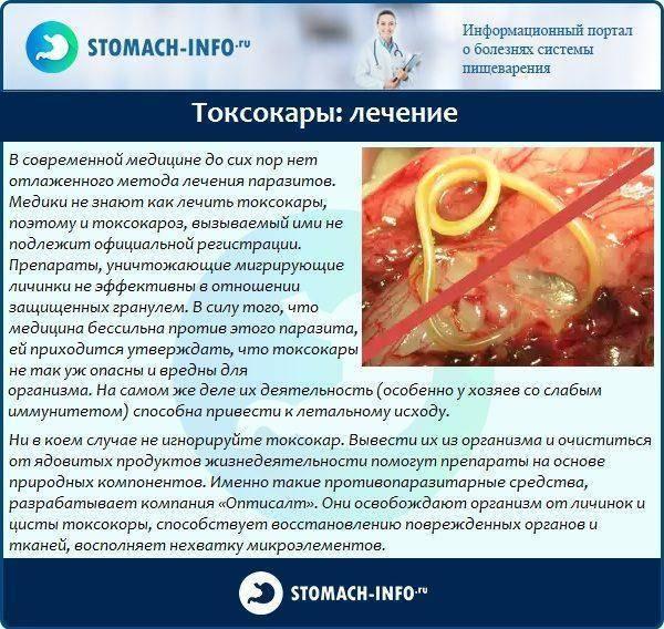 Токсокароз у детей: симптомы и лечение, диагностика заболевания, возможные последствия и профилактика токсокароза