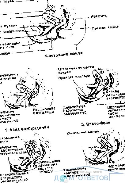 Беременность от пальца - вопрос гинекологу - 03 онлайн
