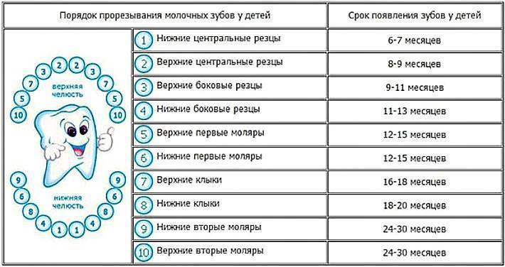 Сроки прорезывания зубов у детей: таблица появления молочных единиц, график и порядок роста