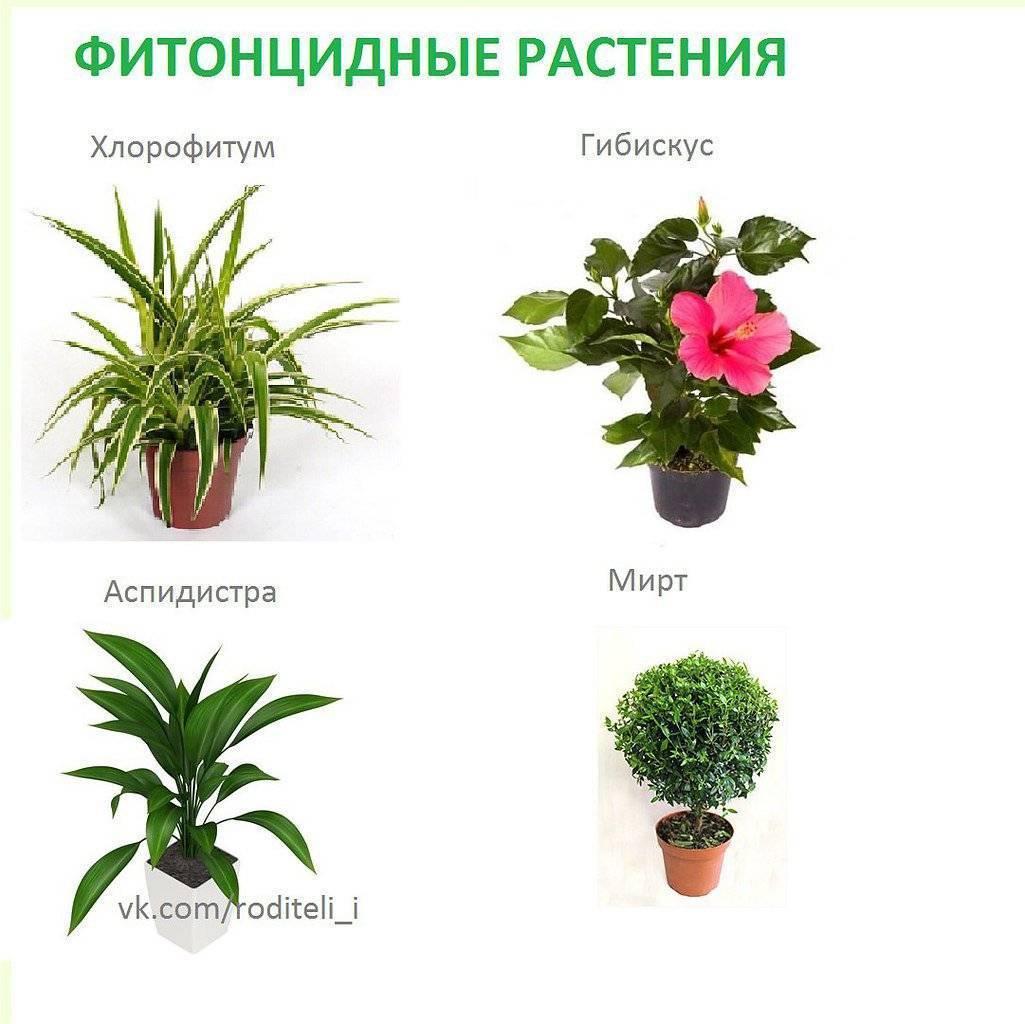 Растения для детской комнаты: что можно и что нельзя на supersadovnik.ru