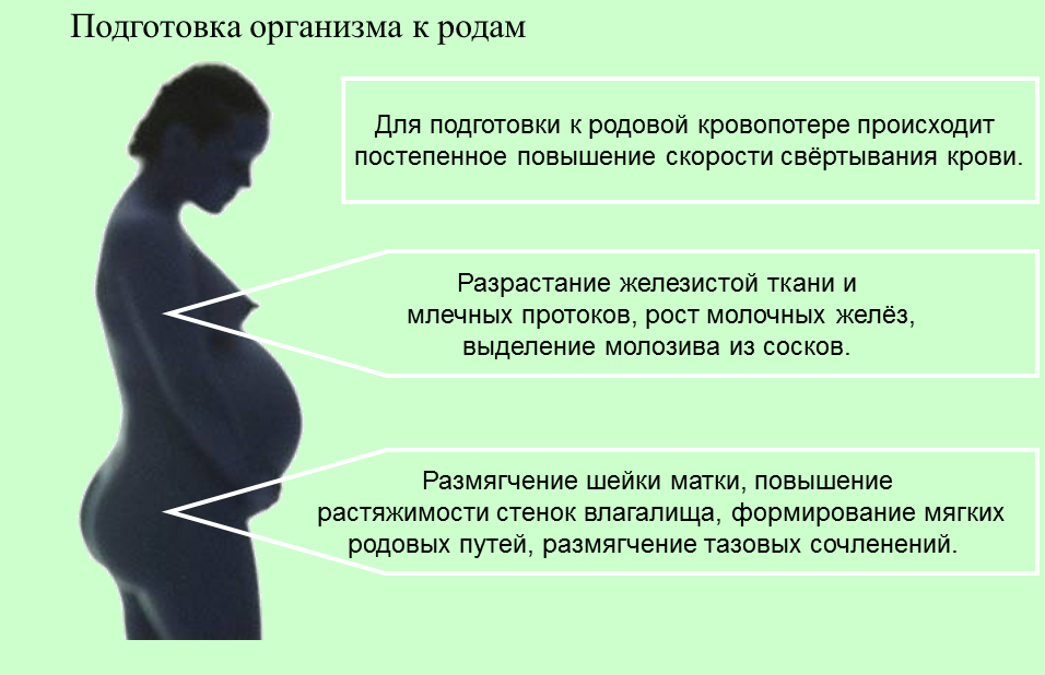 Предвестники родов на 36-37 неделях беременности