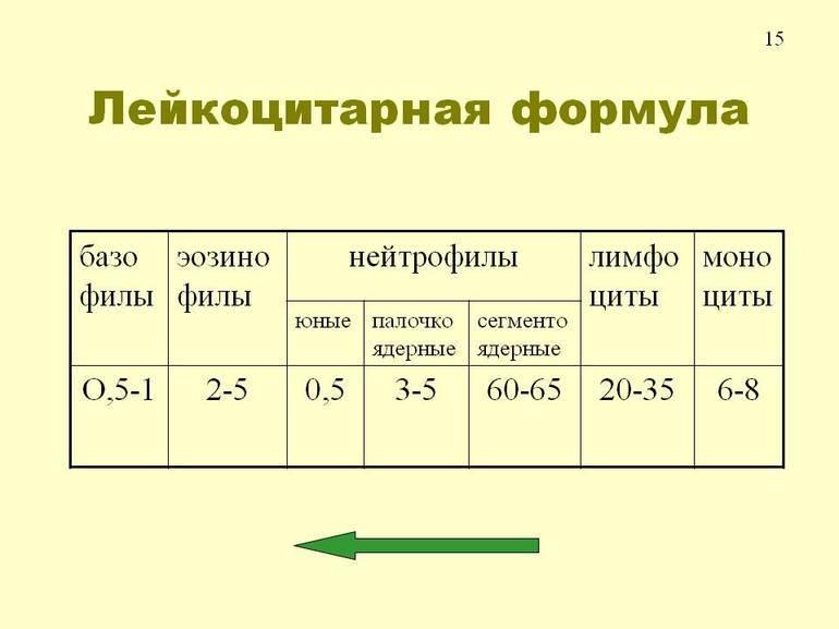Лейкоцитарная формула крови, расшифровка у детей разного возраста