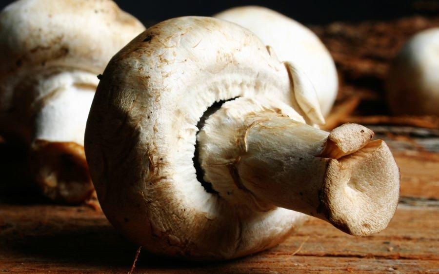 Почему нельзя грибы при грудном вскармливании. все о шампиньонах при грудном вскармливании и принципах вкусного питания кормящей маме на заметку - новая медицина