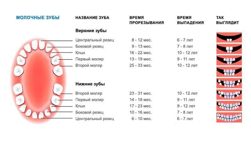 Молочные зубы у детей: очередность и порядок прорезывания