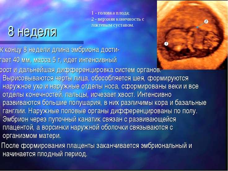 С какого периода начинает формироваться плацента. вопросы. функции плаценты при беременности