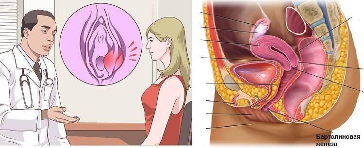 Половые губы при беременности, изменения / mama66.ru
