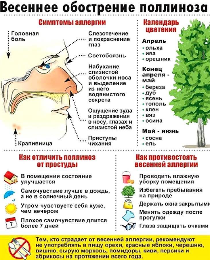 Аллергия на деревья • аллергия и аллергические реакции