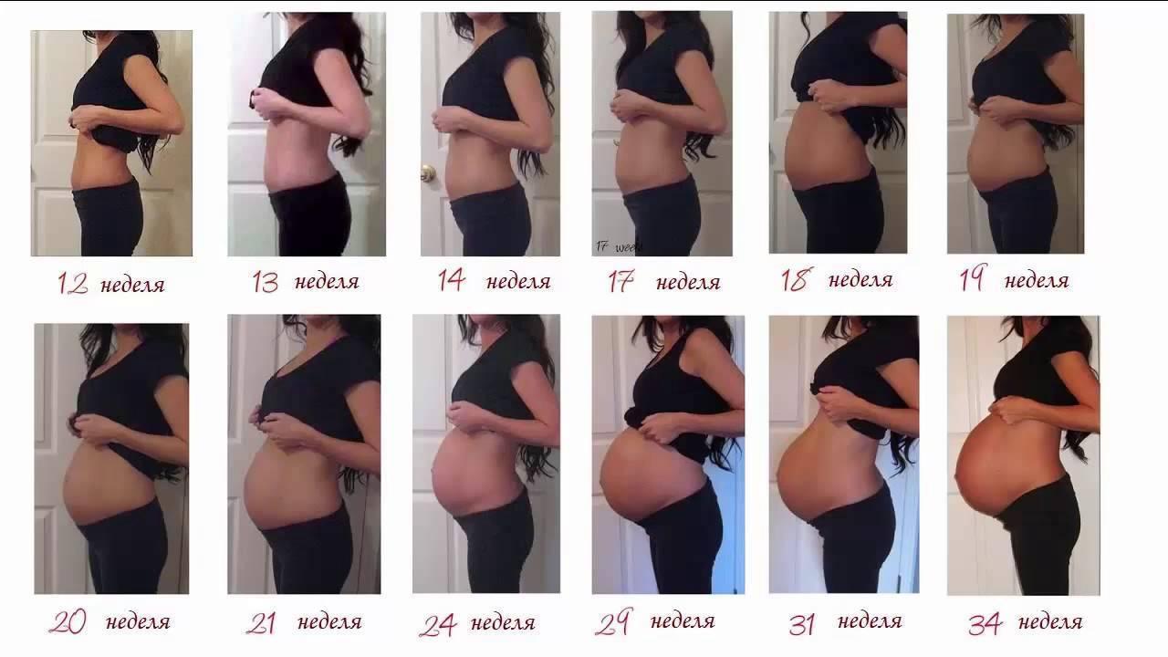 Правила роста живота во время беременности