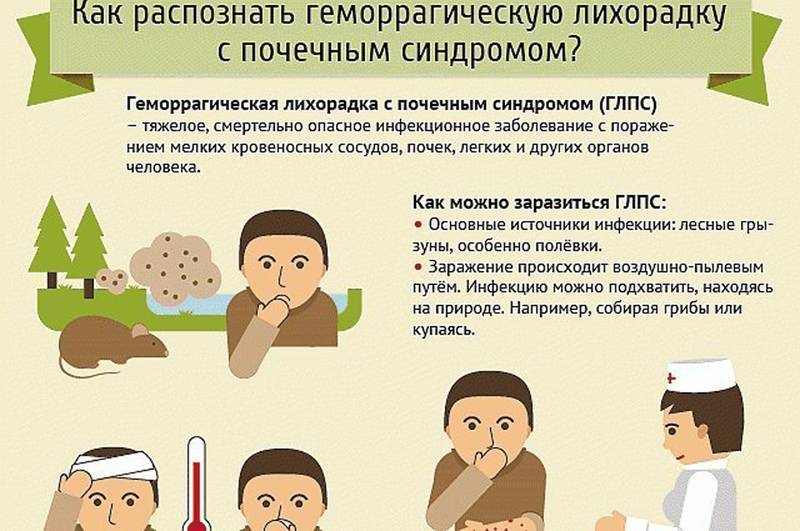Мышиная лихорадка: инфекционист о заболевании и заражении им, симптоматика, диагностика, терапия, профилактика