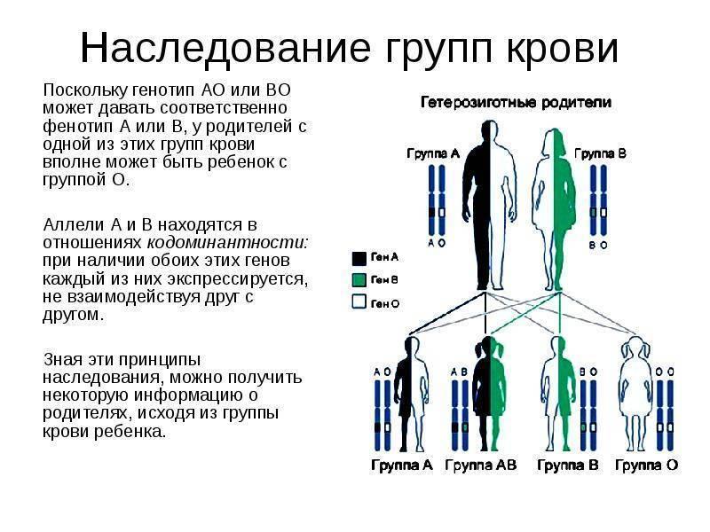 Закономерности наследования группы крови и резус-фактора ребенком