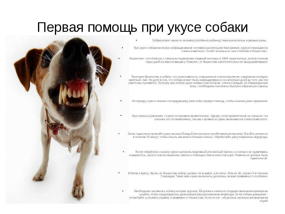 Ответственность собственника собаки, если она укусила ребенка