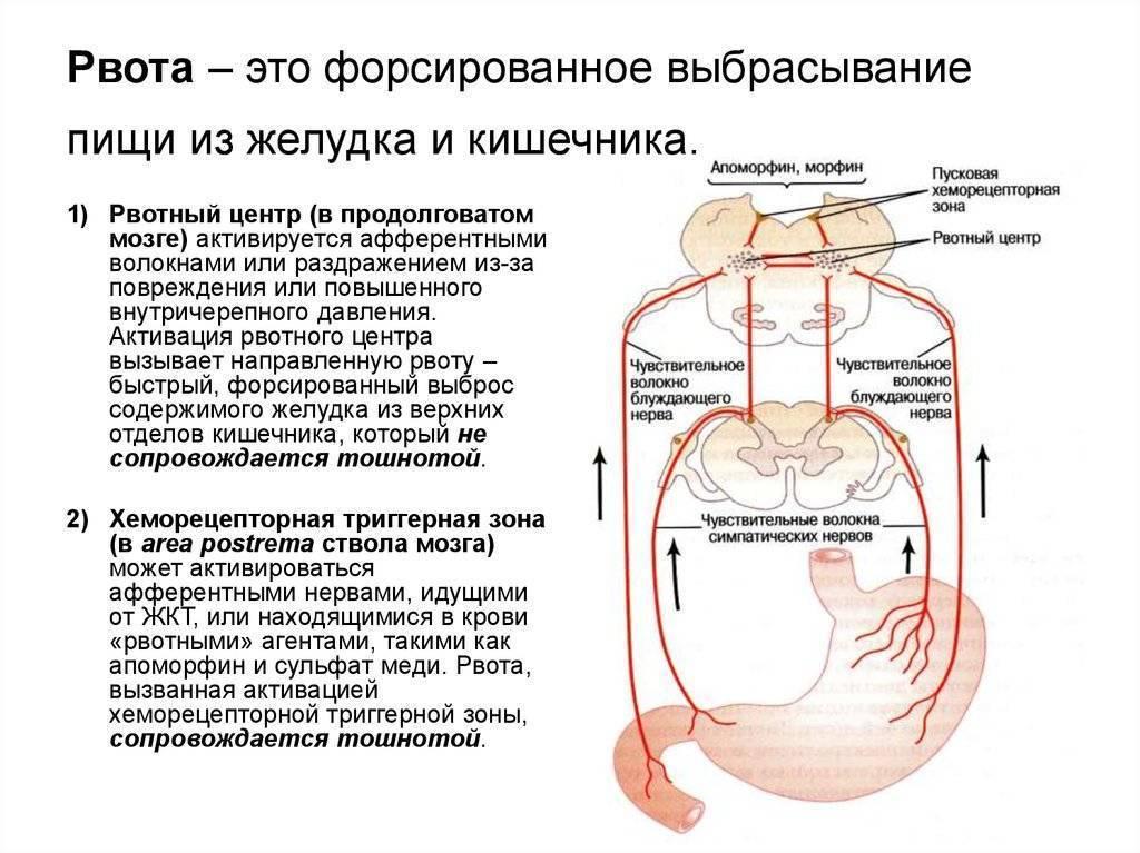 Как завести желудок ребенку после рвоты. остановился желудок у ребенка: что делать? запуск желудка после отравления