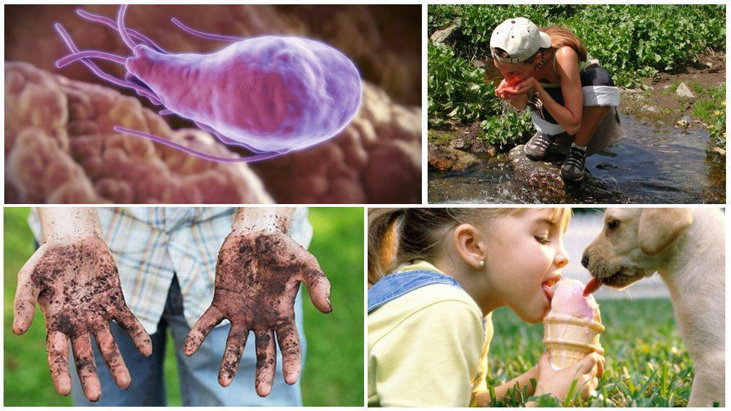 Лямблии в печени – симптомы и лечение, лямблии у детей