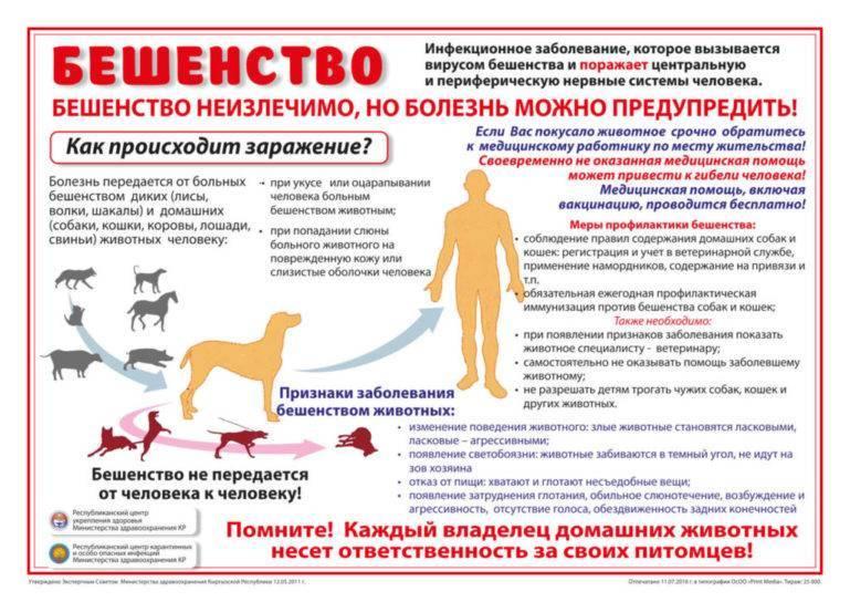 Что делать, если ребенка укусила домашняя или дворовая собака: куда обращаться, какие нужны прививки? собака укусила ребенка что делать родителям