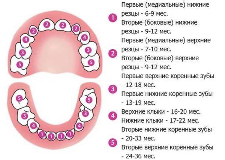 Кашель при прорезывании зубов — комаровский