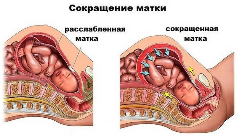 Почему возникает пульсация в животе при беременности