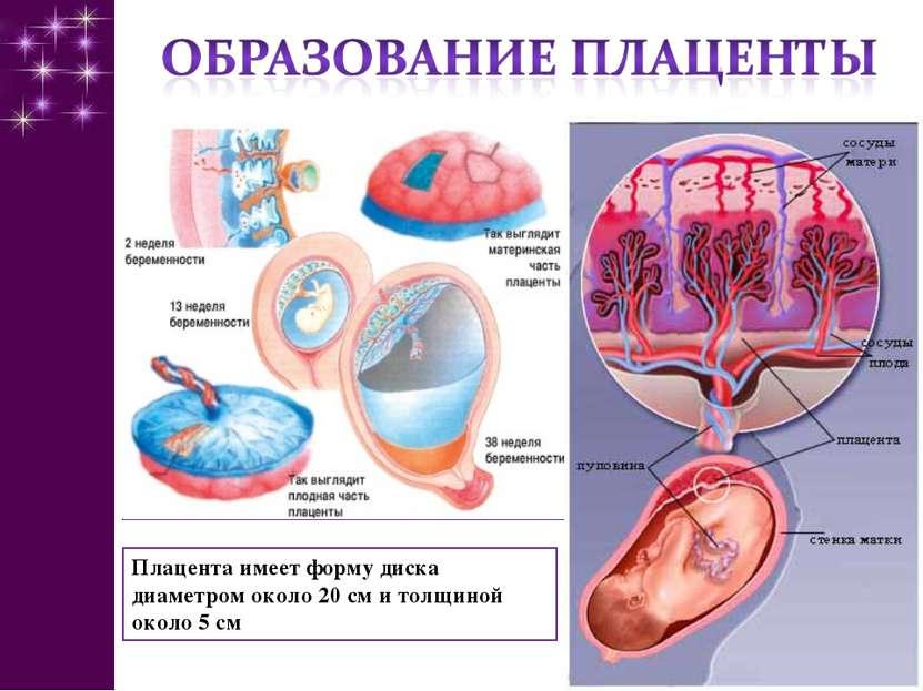Плацента – во время беременности и после родов: что нужно знать