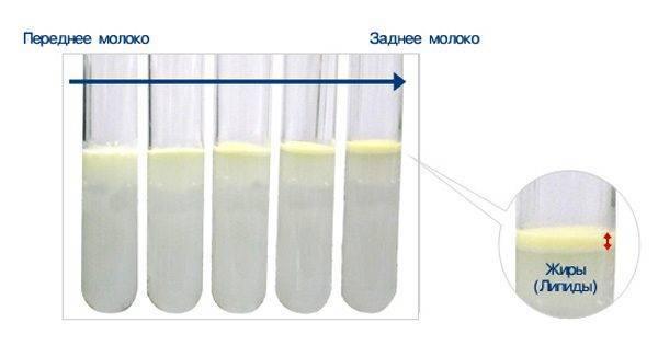 Как повысить жирность грудного молока?
