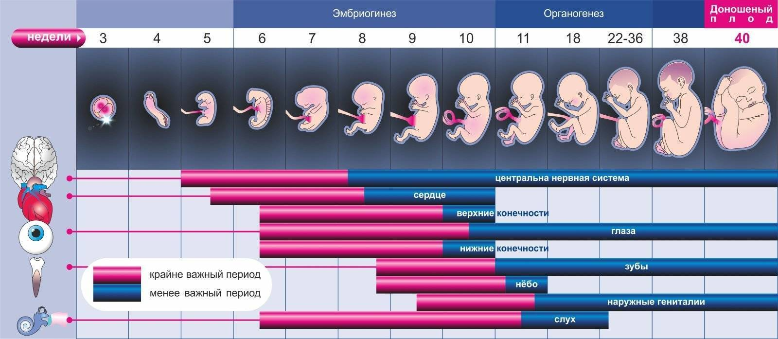 Этапы развития ребенка от рождения до года