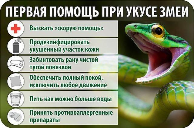 Первая помощь после укуса змеи. опасность змеиных укусов.