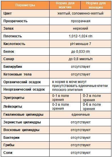 Общийанализ мочи ребенка: таблица для расшифровки