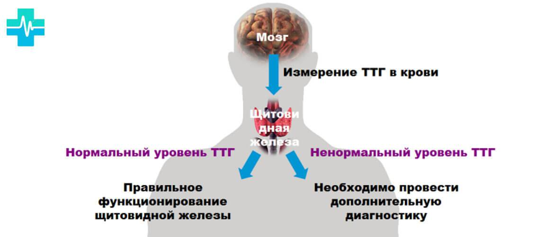 На что влияет гормон пролактин: функции и нормы содержания