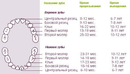 Температура при прорезывающихся зубах причины появления и что делать