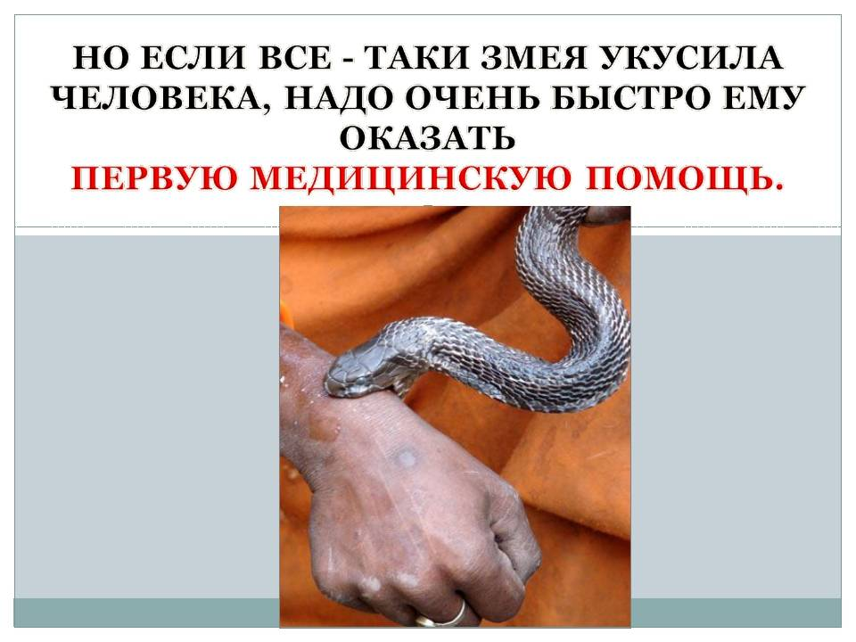 Первая помощь при укусе змеи. укус змеи