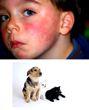 Как проявляется аллергия на животных • аллергия и аллергические реакции