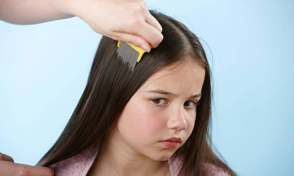 Что делать, если чешется голова, но вшей нет. у ребенка зудит и чешется голова – определяем и устраняем причину - новая медицина