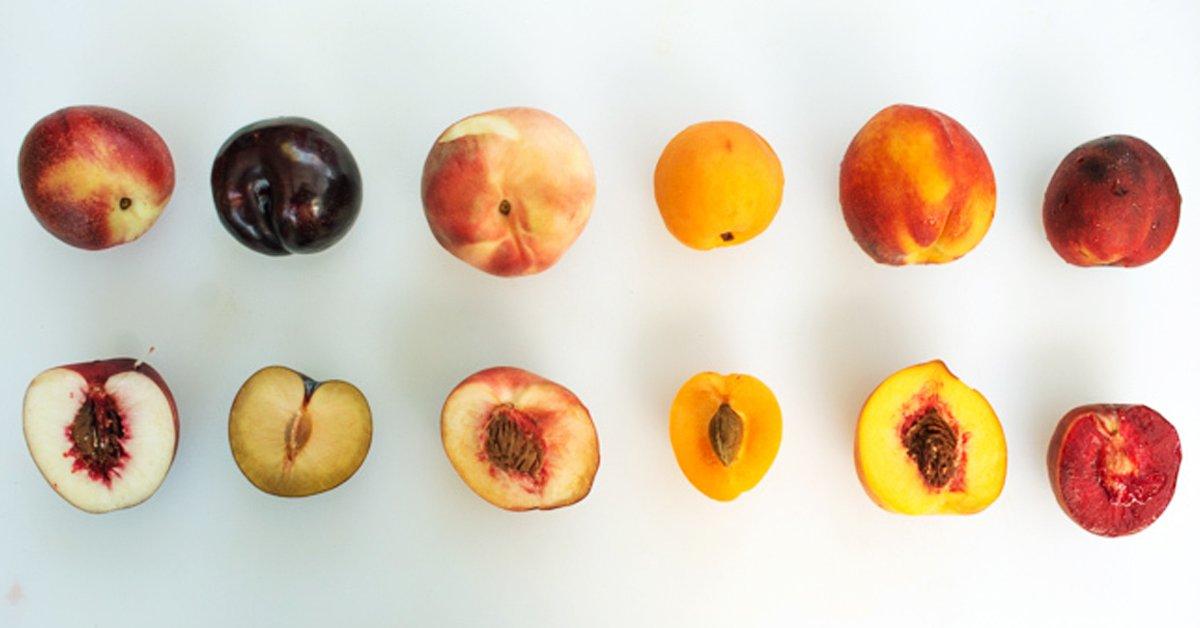 Что будет если проглотить сливовую косточку. алгоритм действий, если ребенок проглотил косточку от сливы, абрикоса, черешни или финика