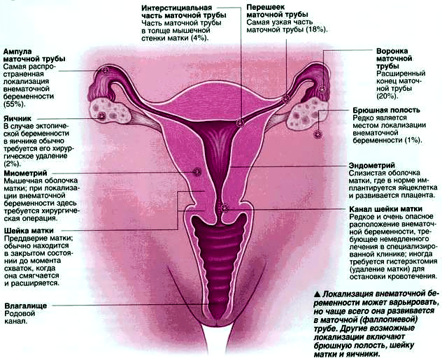 Возможна ли беременность при петинге, если пальцы были во влагалище? - вопрос сексологу-андрологу - 03 онлайн