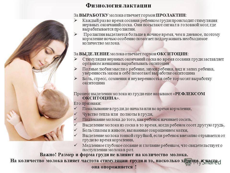 Узи молочных желез при грудном вскармливании: можно ли делать при лактации, показания у кормящей мамы и противопоказания, подготовка, стоимость