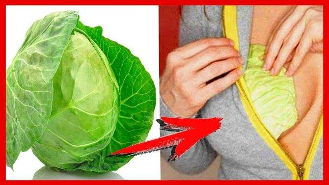 Капустный лист при лактостазе: как прикладывать правильно?
