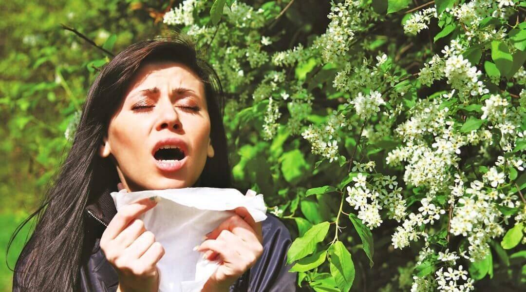 Поллиноз у ребенка: как вылечить аллергию на пыльцу