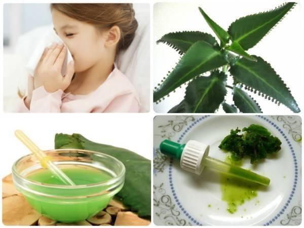 Народные средства от заложенности носа, рецепты, применение