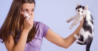 Как может проявляться аллергия на животных у детей: симптомы и эффективные способы борьбы с нею