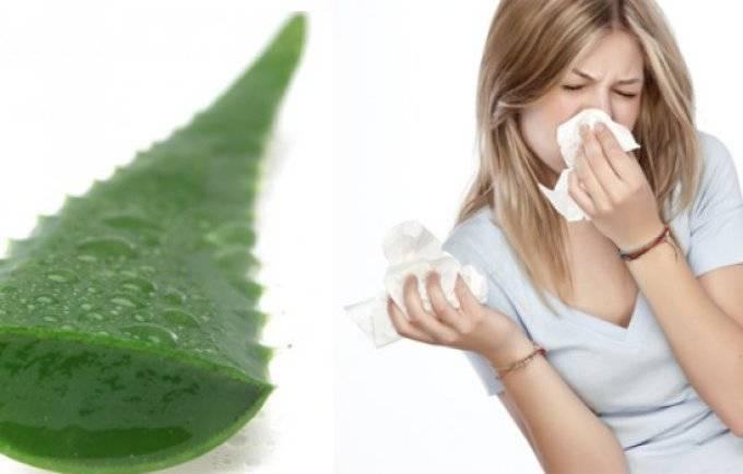 Можно ли капать алоэ в нос грудничку и как это правильно делать? рецепты лечебных средств